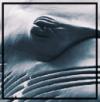Whale_eye