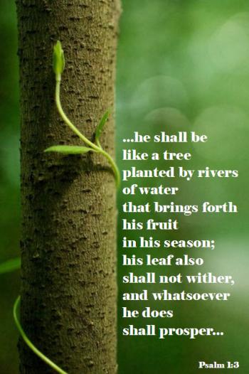 Psalm1.3