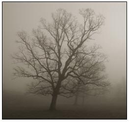 Winter_sadness_1
